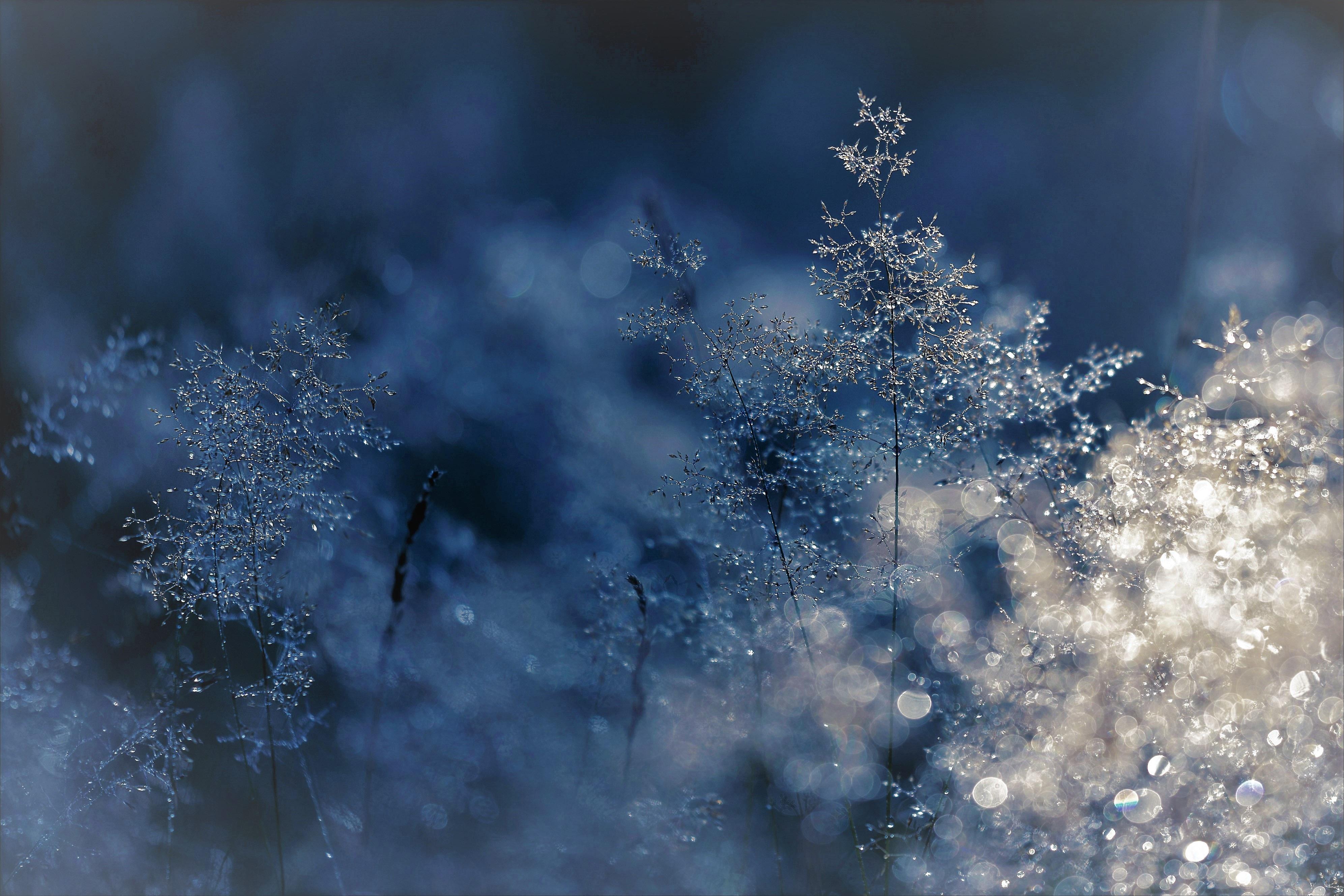 四季养生 : 冬季
